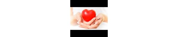 Serce - Układ Krwionośny